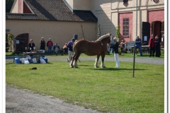 ardenner-osterby-2009-006