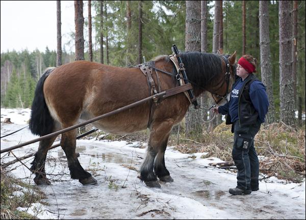 skogsdagen-20120310-009