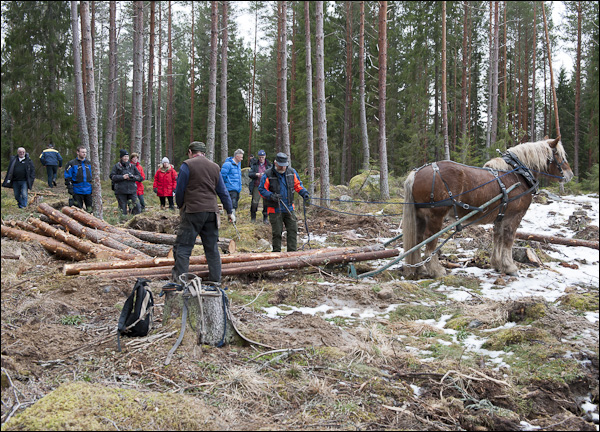 skogsdagen-20120310-031