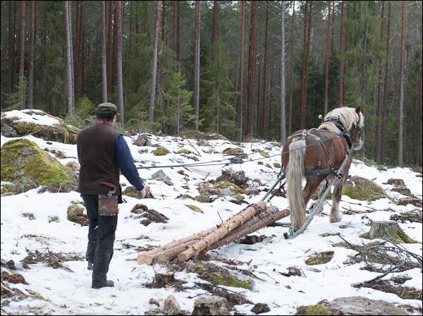 skogsdagen-20120310-038