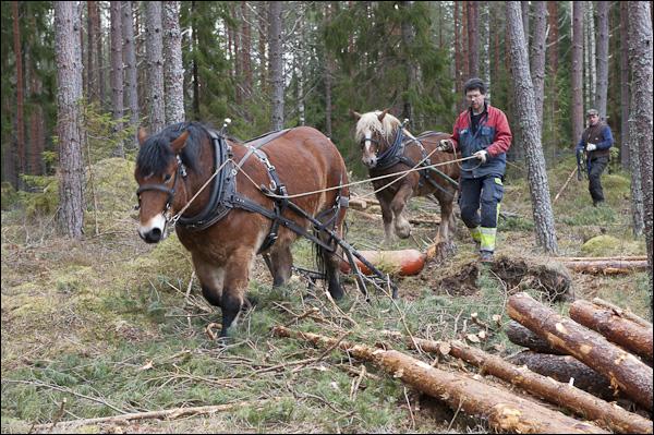 skogsdagen-20120310-041