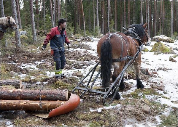 skogsdagen-20120310-052