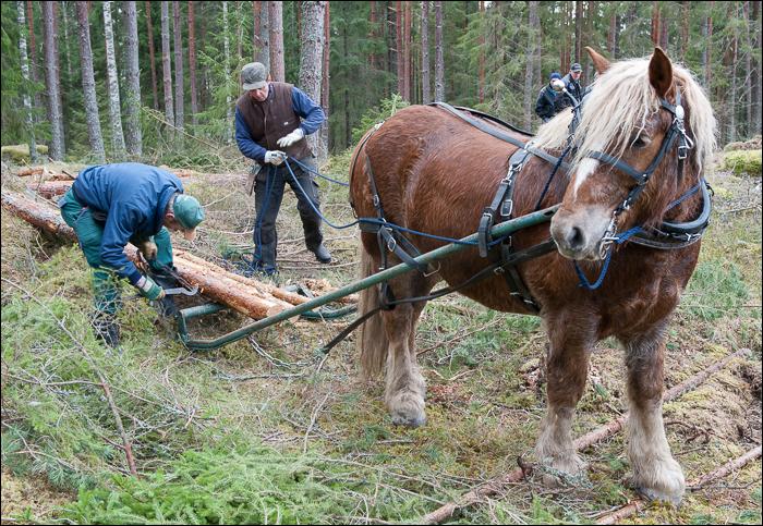 skogsdagen-20120310-059