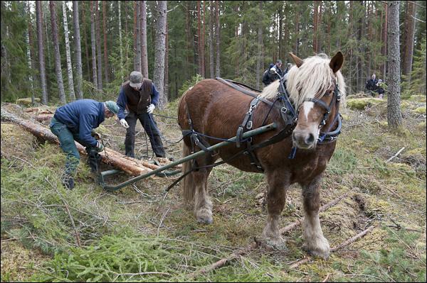 skogsdagen-20120310-060