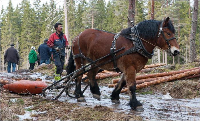 skogsdagen-20120310-078