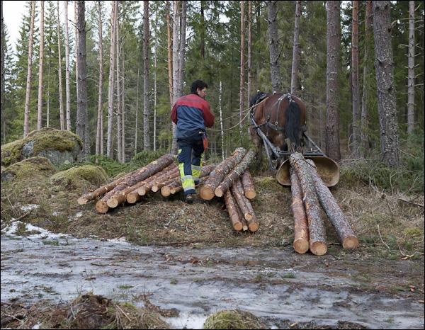 skogsdagen-20120310-082