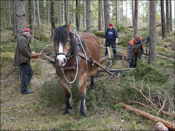 skogsdagen-20120310-084