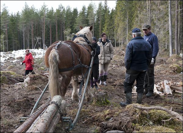 skogsdagen-20120310-126