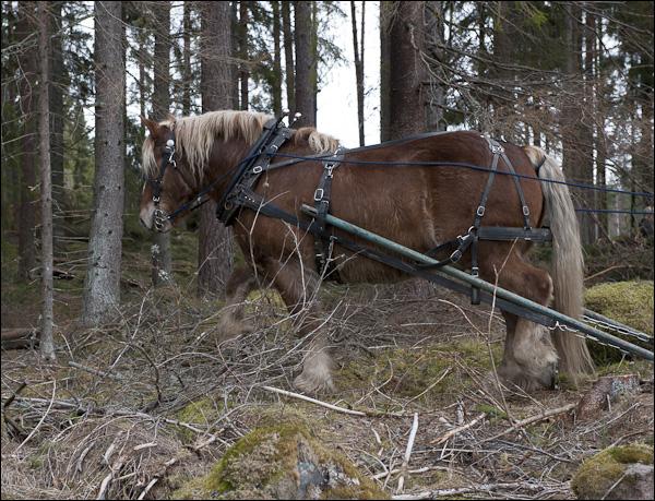 skogsdagen-20120310-133