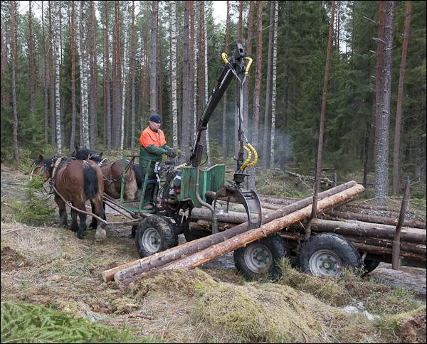 skogsdagen-20120310-142