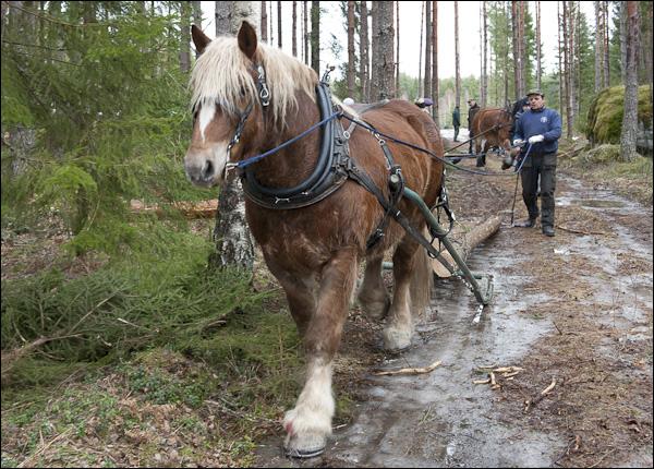 skogsdagen-20120310-146