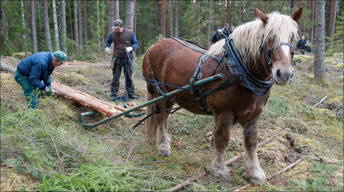 skogsdagen-20120310-058