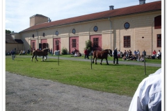 ardenner-osterby-2009-007