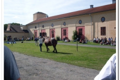 ardenner-osterby-2009-008