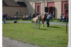 ardenner-osterby-2009-011