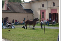 ardenner-osterby-2009-013