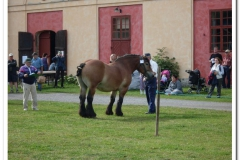 ardenner-osterby-2009-021