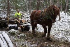 skogsdagen-20170304-104