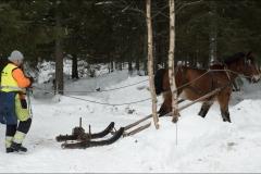 skogsdag-20180303-021