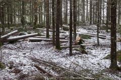 skogsdag-20160305-006
