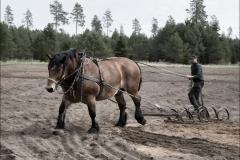 vårbruk-20170521-055